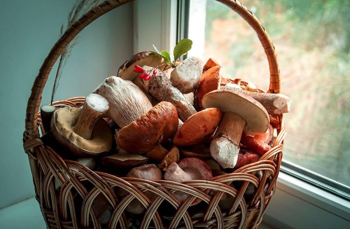 Купить Домашнюю грибницы «Грибной сезон»