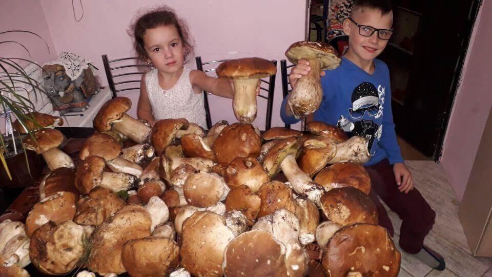 Домашняя грибница «Грибной сезон» Фото