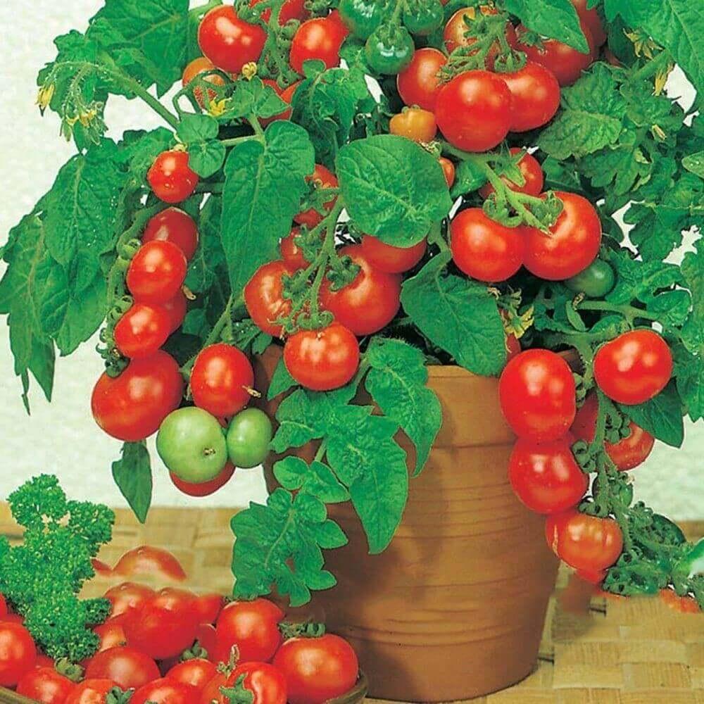 Овощи для Домашняя мини-ферма «Домашние грядки».