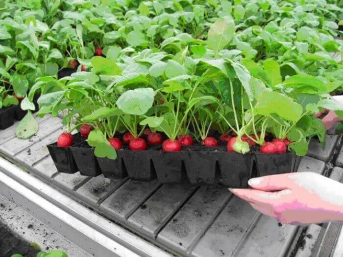 Домашняя мини-ферма «Домашние грядки» Выбор Овощей