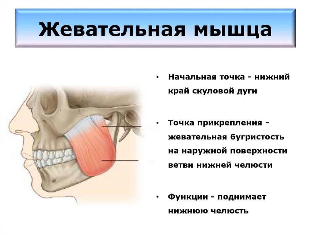 как избавиться от гипертонуса жевательных мышц