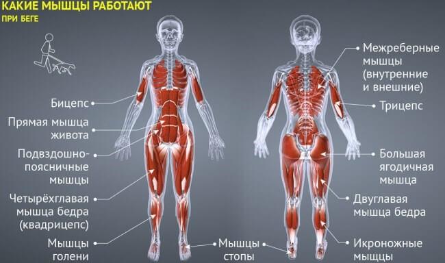 какие мышцы раюотают при беге бег для похудения